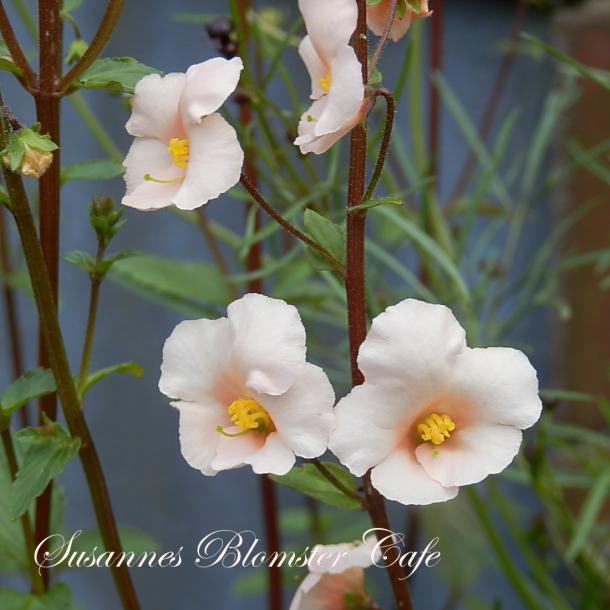 champost plantesæk tilbud