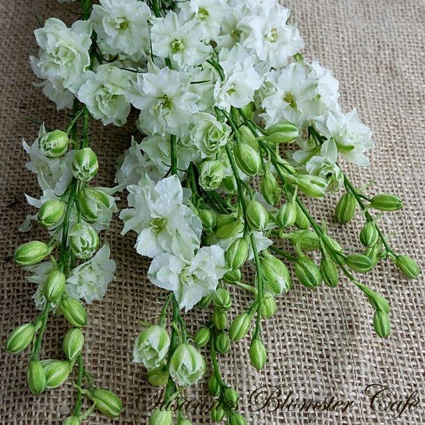 Larkspur Sublime White - Sommer Ridderspore - frø