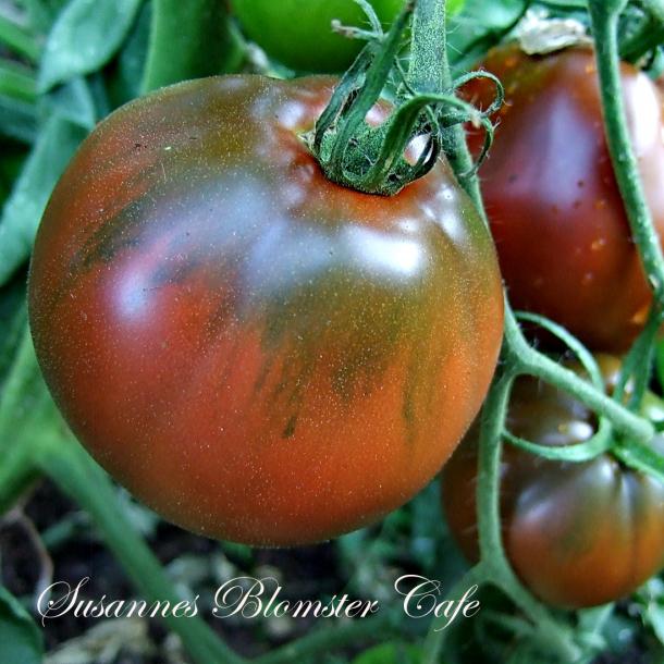 Tomat Black Asian Pearl - frø - Rødbrune tomater