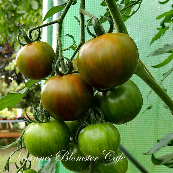 Tomat Green Tiger - Cherry Tomat - frø